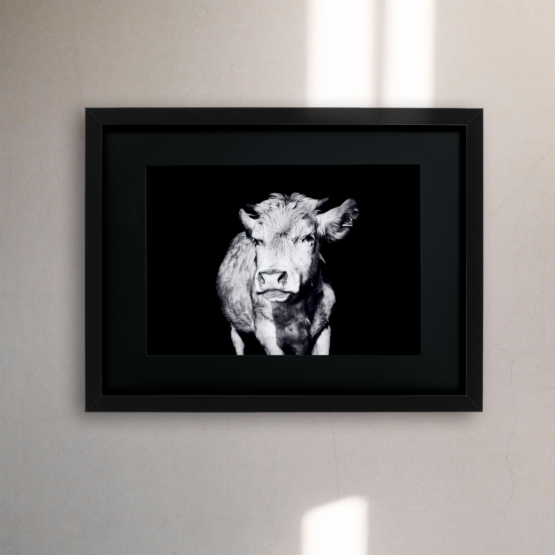 Fabian Hensel Fotograf Mannheim Kuh